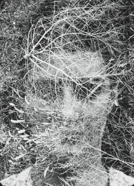 henry callahan-eleanor