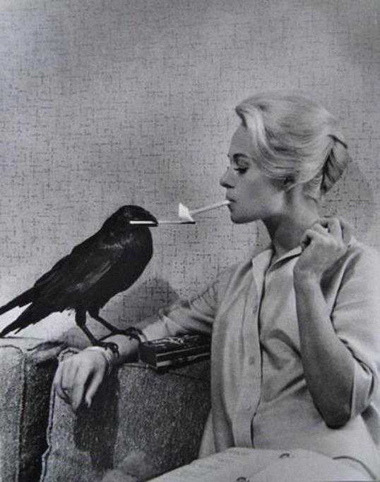hičkoko paukščiai