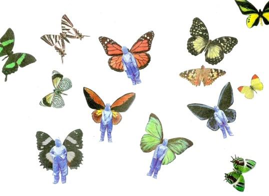 drambliukai-drugeliai